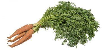 1024px-Vegetable-Carrot-Bundle-wStalks